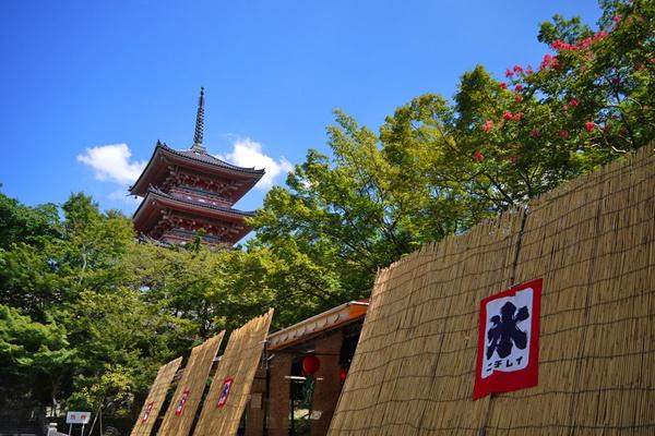 京都「エコサマー」は小学生の運賃が無料、実施日は?