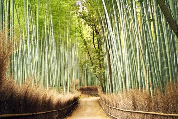 阪急の乗り放題切符「京都・嵐山1dayパス」の発売期間