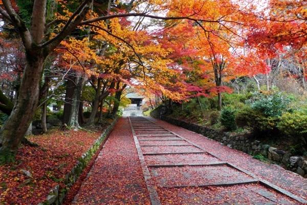 大阪から京都へ紅葉狩りに便利でお得な日帰り切符