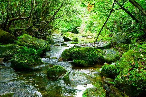 鞍馬、大原などへ乗り放題「京都洛北・森と水のきっぷ」