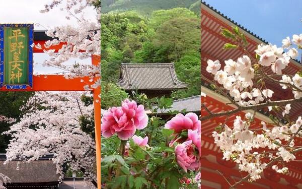 JR乗り放題「春の関西1デイパス」の南海、近鉄、京阪周遊チケット引換券
