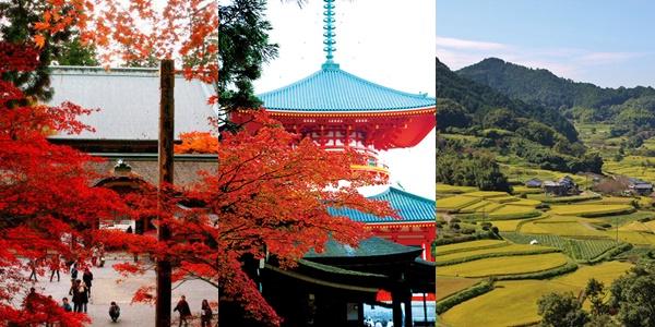 JR「秋の関西1デイパス」で使える近鉄、南海、京阪の周遊チケット
