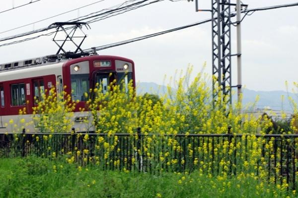 1日乗車券「奈良・斑鳩1dayチケット」はどれくらいお得なのか?