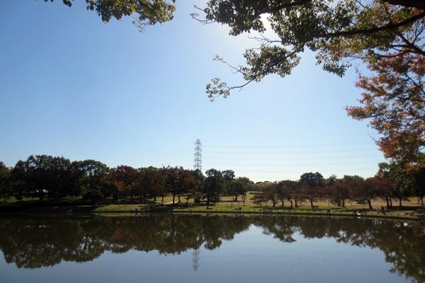 堺市の大仙公園
